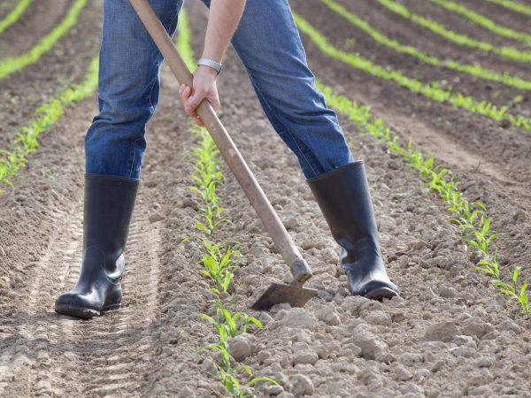 Uma pessoa usando uma enxada para manusear a terra da horta