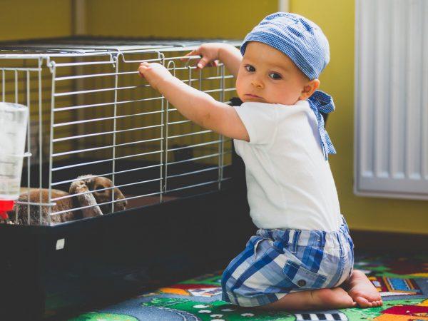 (Bebê apoiado em gaiola olhando para coelho)