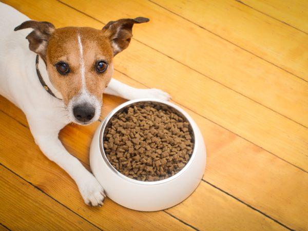 Imagem de cachorro de pequeno porte se alimentando em um pote de metal