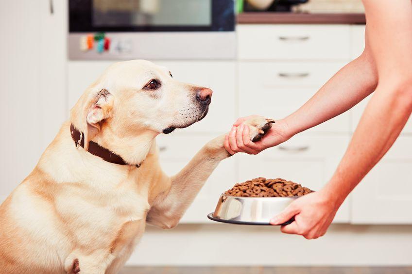 Imagem de pessoa colocando a ração para o cachorro em um pote metálico
