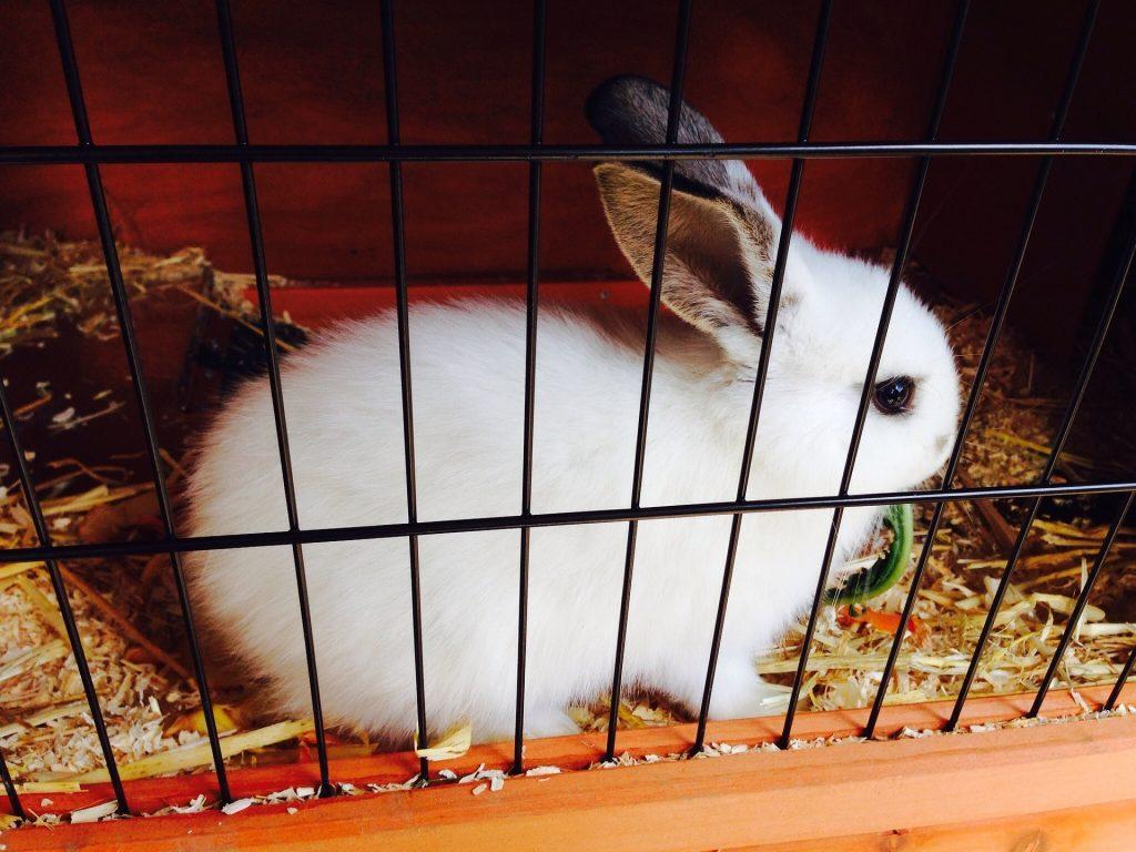 Imagem aproximada de coelho em gaiola