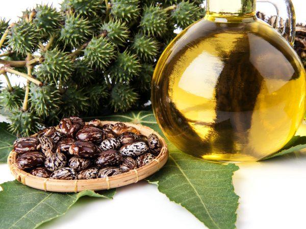 Frasco com óleo de rícino, folhas e sementes da mamona.