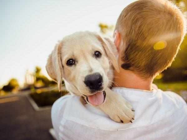 Menino carregando cachorro.
