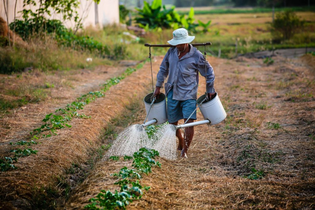 Na imagem um homem regando uma plantação com dois regadores brancos.
