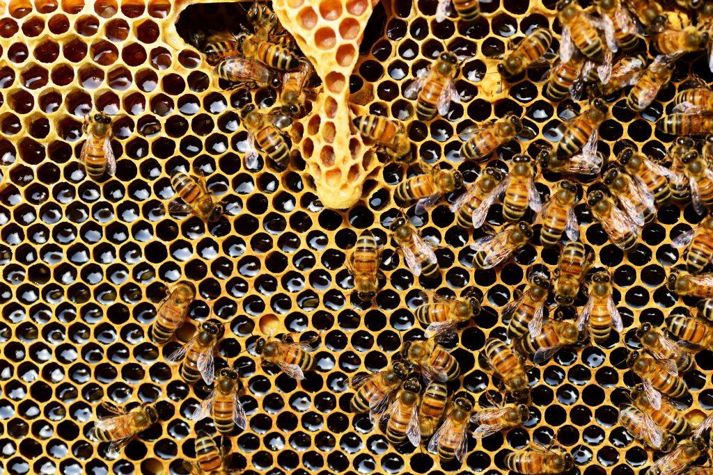 Foto de um favo de mel com divesas abelhas em cima, em maioria concentradas do lado direito.