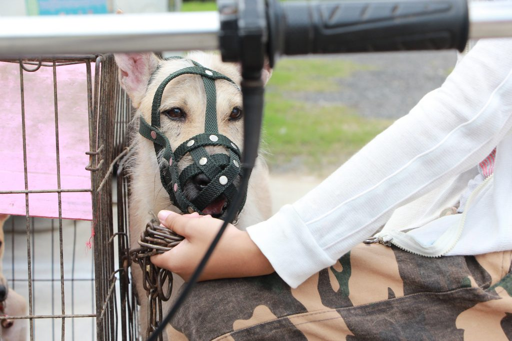 Image and a dog wearing a fabric muzzle
