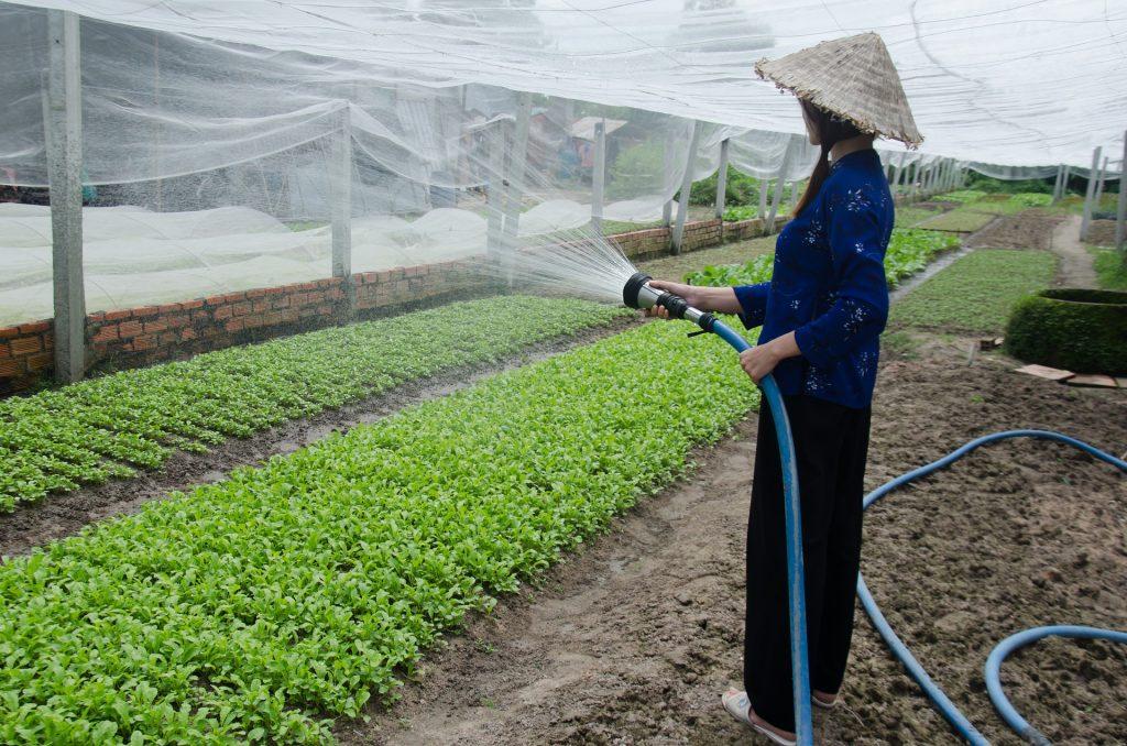 mulher usando mangueira para irrigar a plantação