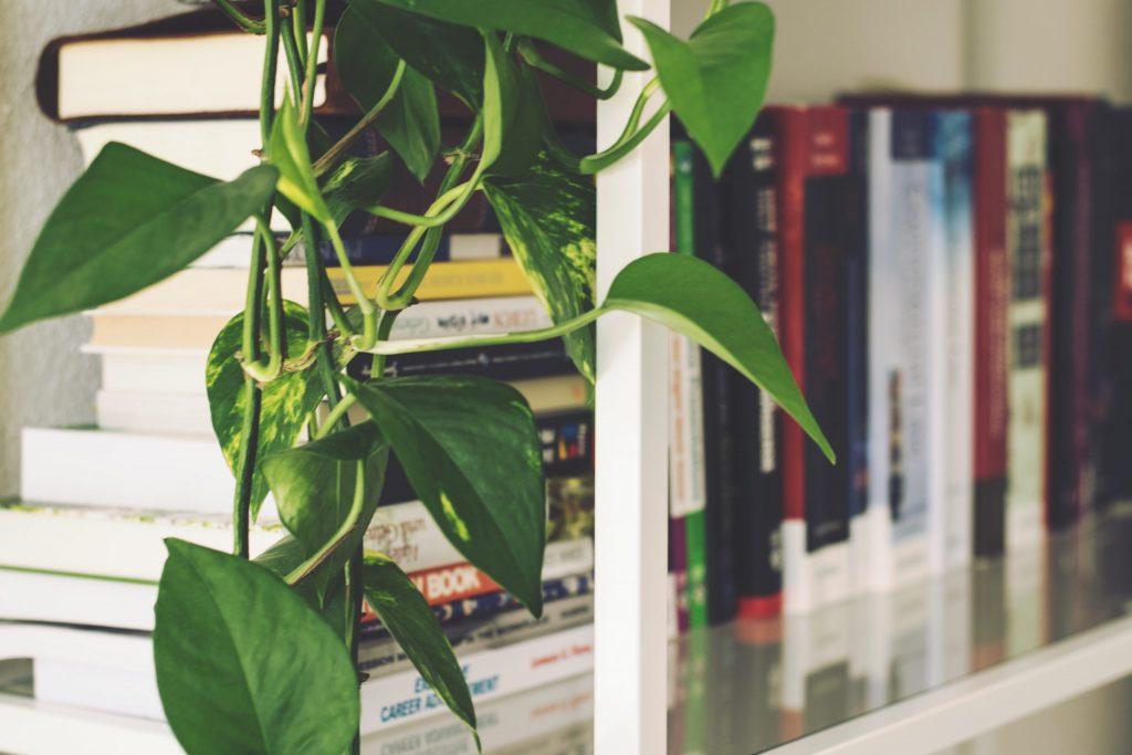 Na foto uma estante branca com alguns livros e flores.