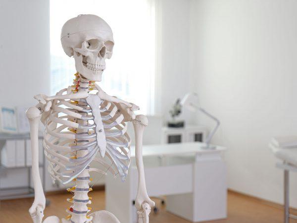 Imagem de um modelo de anatomia de um esqueleto humano.