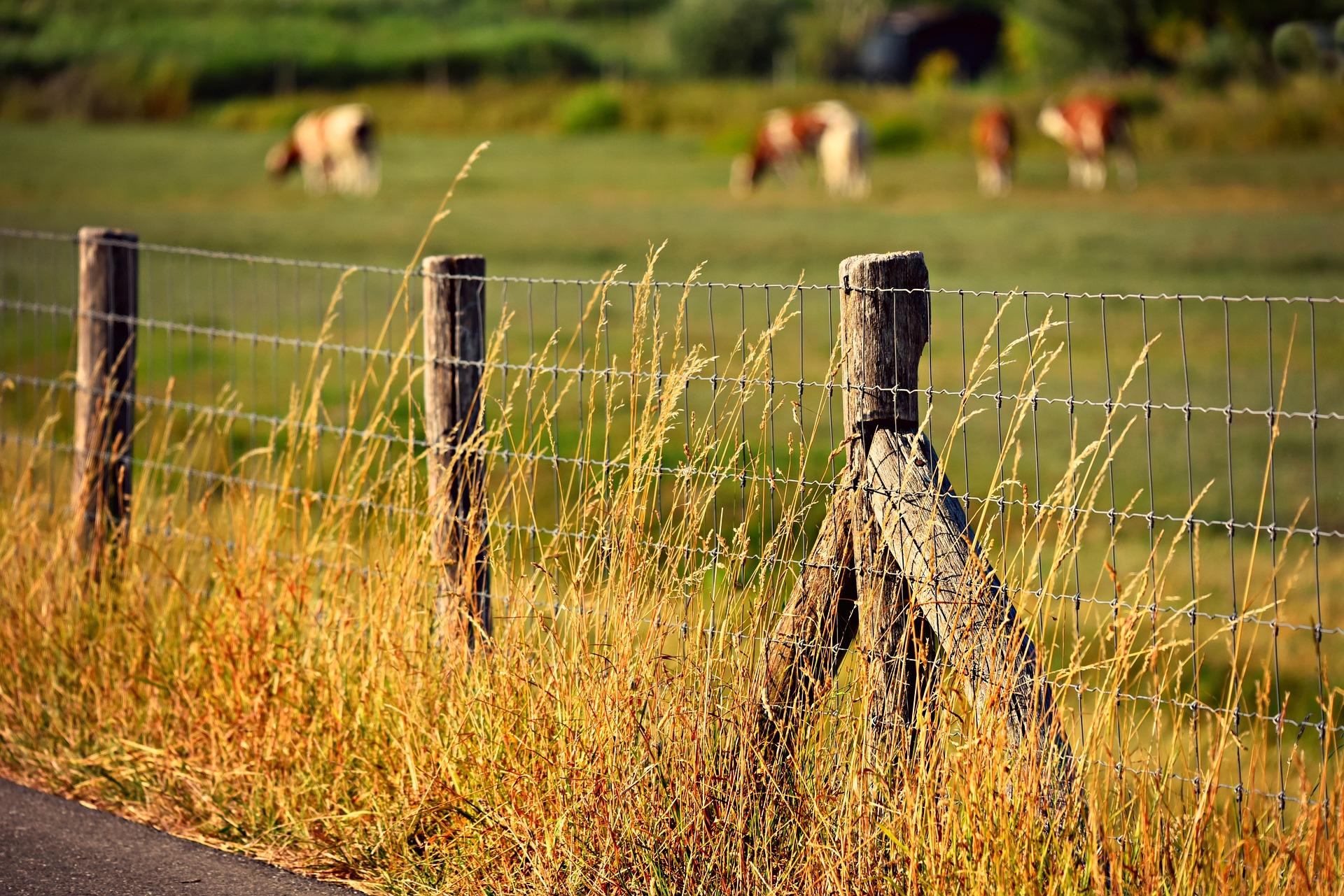 Imagem mostra uma cerca de arame farpado com gado pastando ao fundo.