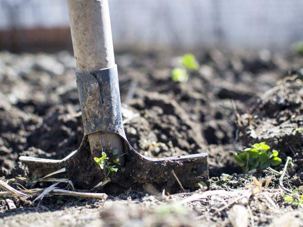 imagem em zoom de uma pá sendo enterrada no solo, para revolver a terra.