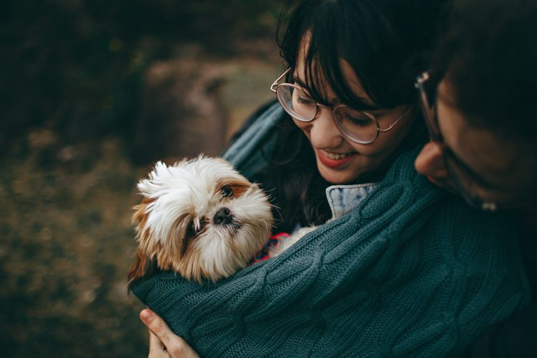 In the picture a couple holding a Shih Tzu dog on their lap.