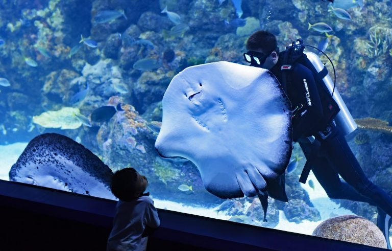 Imagem mostra um menino num aquário, observando um mergulhador atrás de uma enguia, grudada no grande vidro de um tanque.