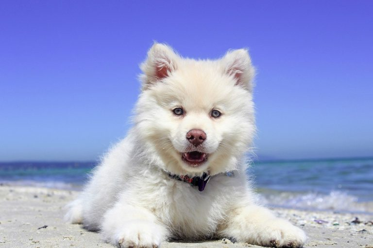 In the photo a puppy dog on a beach.