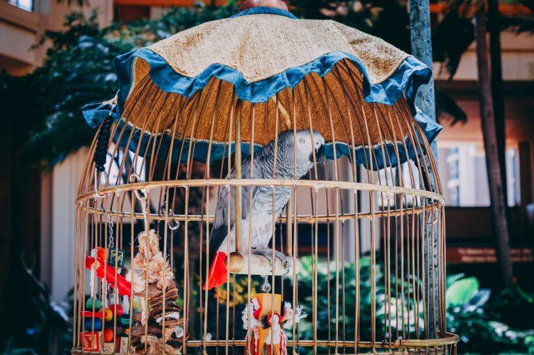 Imagem de pássaro em viveiro de madeira