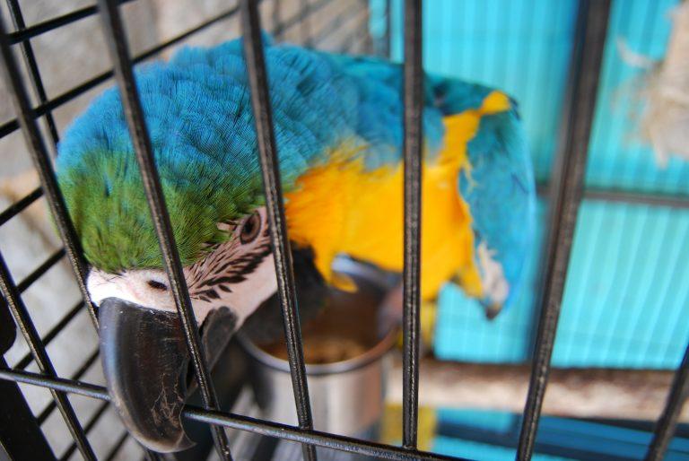 Imagem de pássaro colorido em viveiro de metal