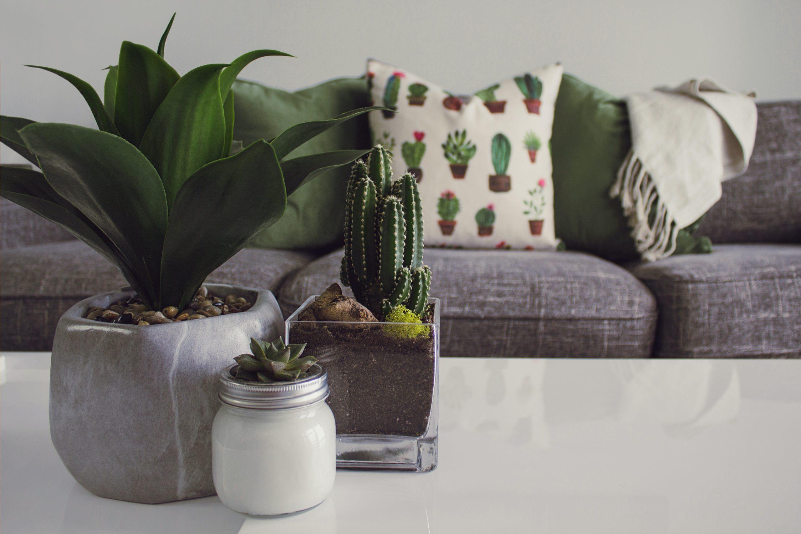 Foto de três plantas pequenas, aparentemente artificiais, em vasos, em cima de uma mesa branca, com um sofá cinza ao fundo. No sofá, suas almofadas verdes, e uma branca com estampa de cactus.
