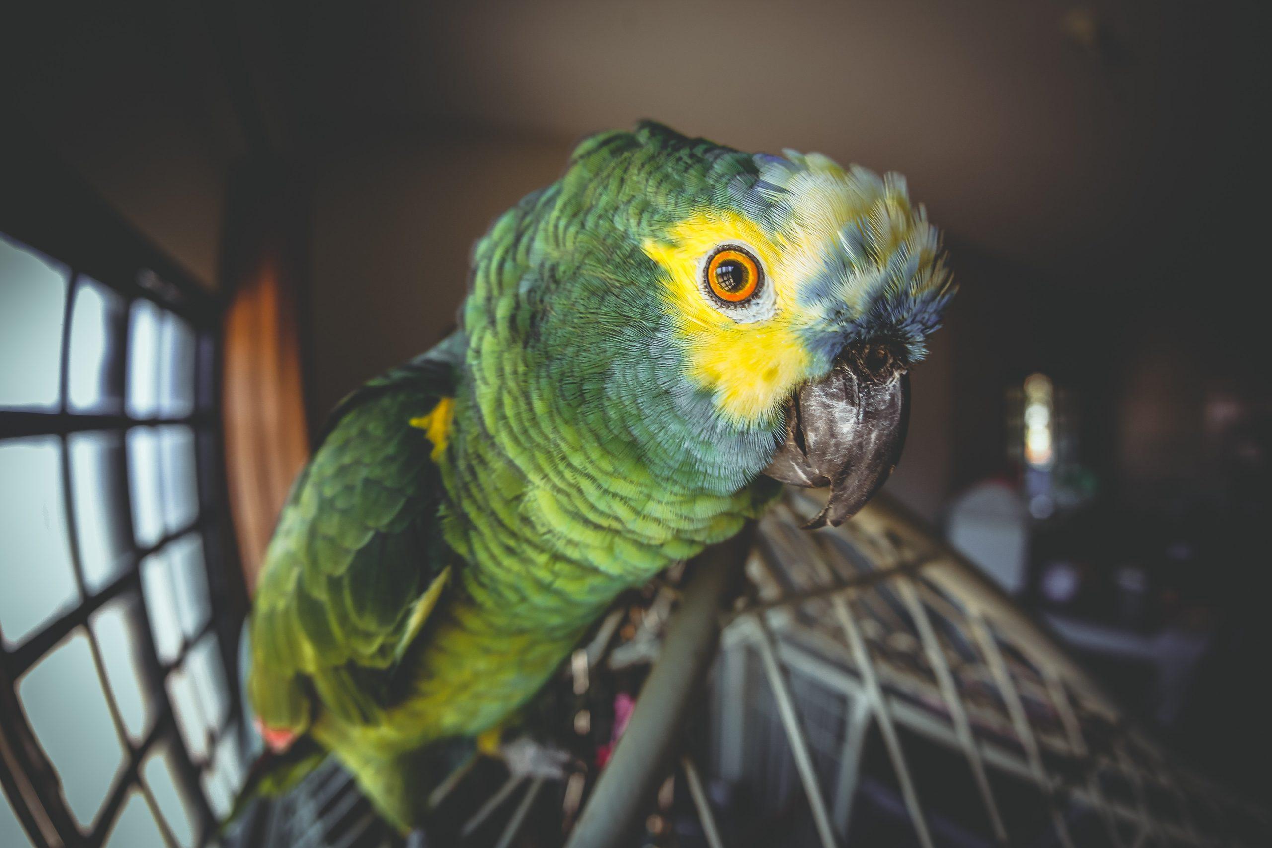 Close em papagaio sobre seu viveiro.