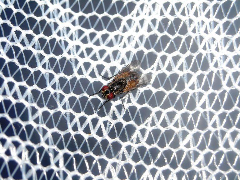 Imagem de mosquiteiro branco para carrinhos com mosquito em destaque