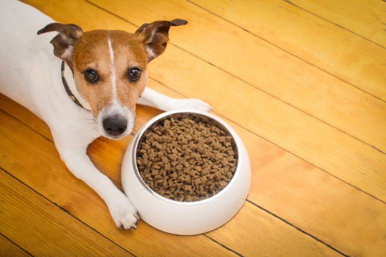 Dog next to feeder with feed.