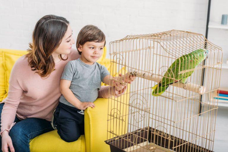 Mãe e filho sentados no sofá e olhando papagaio em seu viveiro.