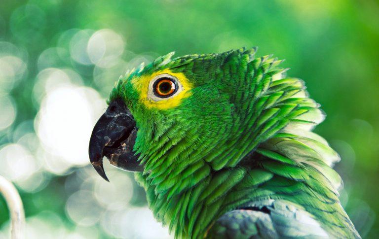 Close em cabeça de papagaio com fundo desfocado.