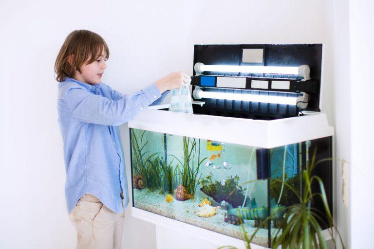 Menino mexendo em aquário.