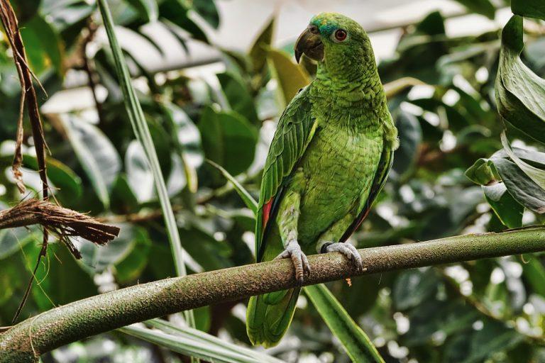 Papagaio em pedaço de galho em meio a folhas verdes.