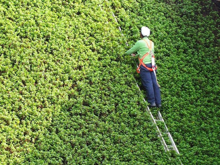 Imagem mostra um homem em uma grande escada em uma área verde.