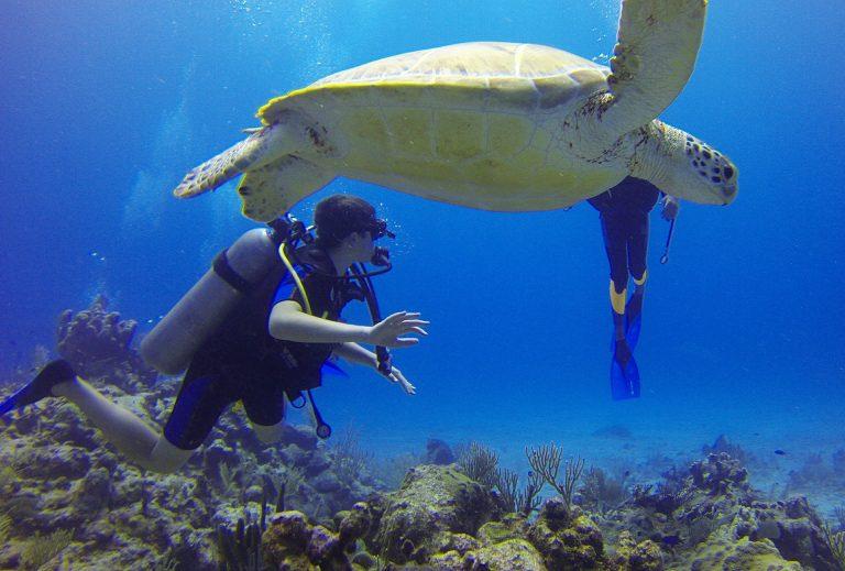 magem mostra duas pessoas encontrando uma tartaruga durante um mergulho