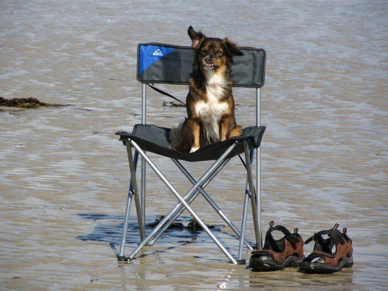 Imagem mostra um cachorro em uma cadeira de acampamento na praia.