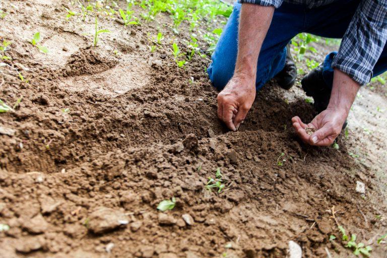 Imagem de um homem plantando sementes.