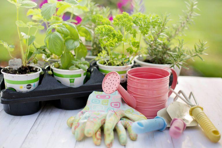 Imagem de ferramentas de jardinagem.