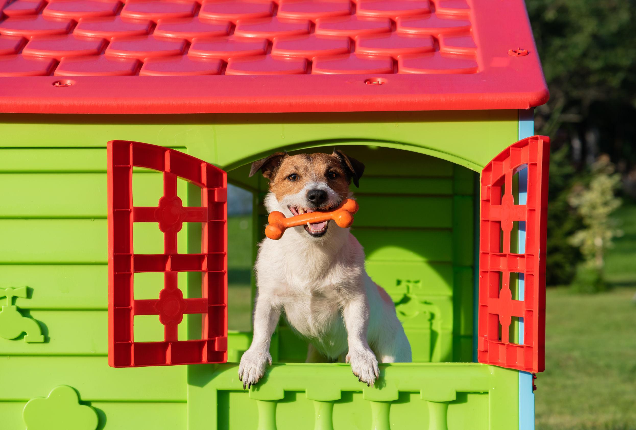 cão na janela da casinha de cachorro