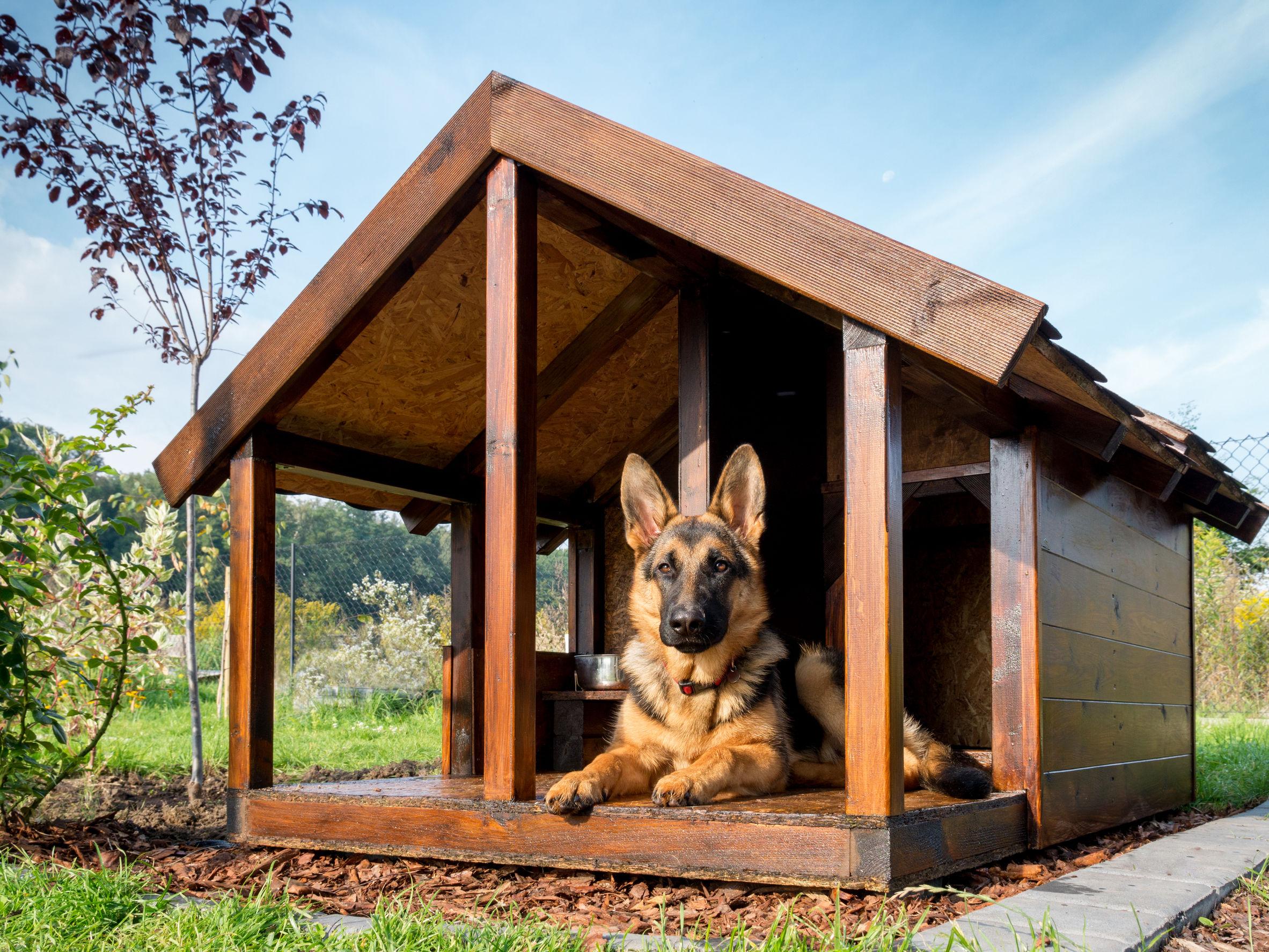 cão de grande porte em sua casinha de cachorro