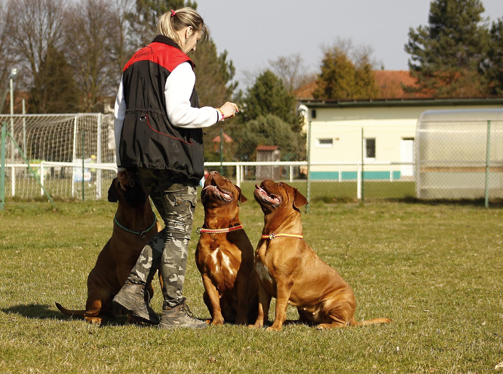 Mulher adestrando três cachorros ao ar livre.