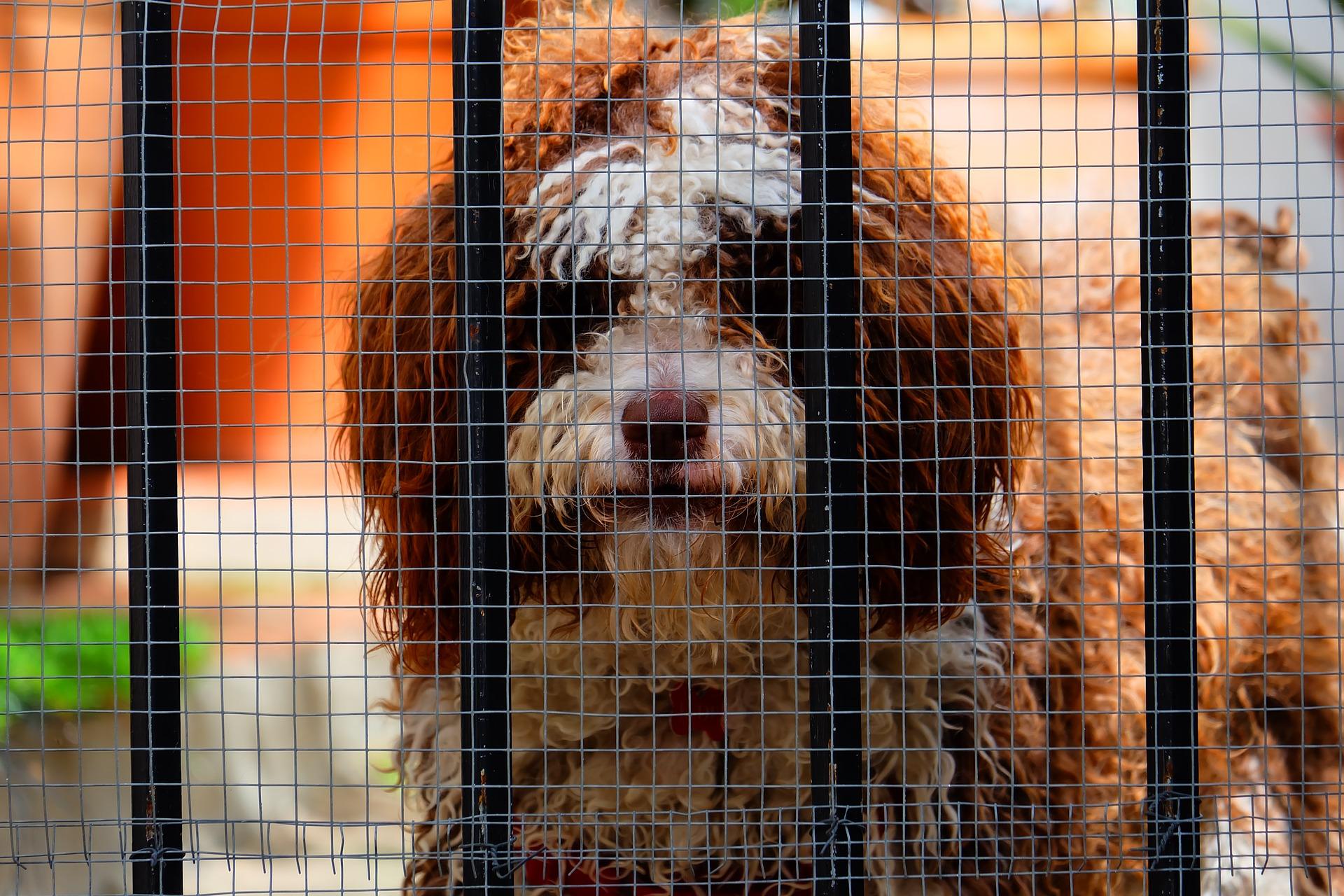 Cachorro dentro de um cercado.