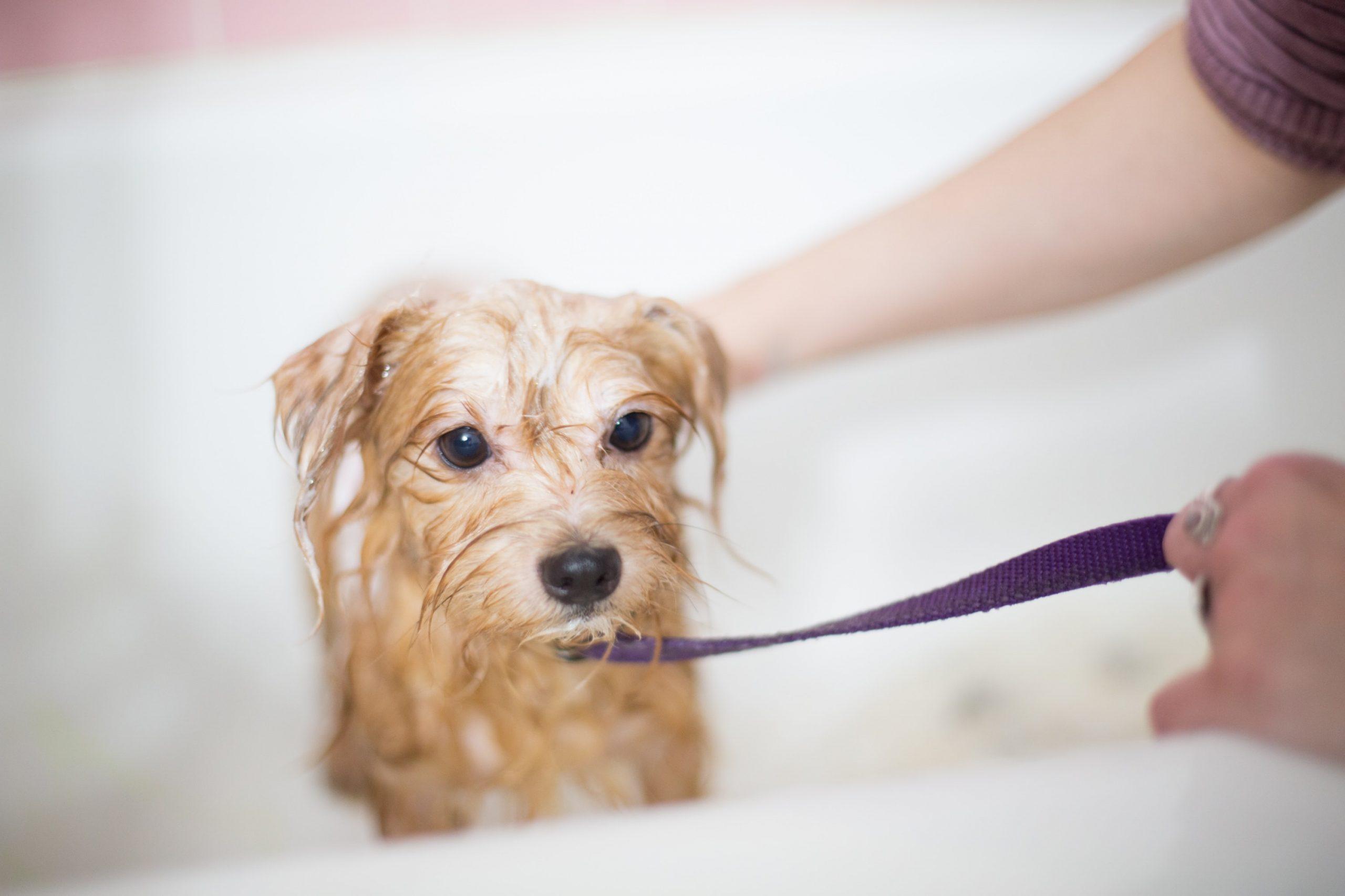 Cachorro molhado dentro de banheira
