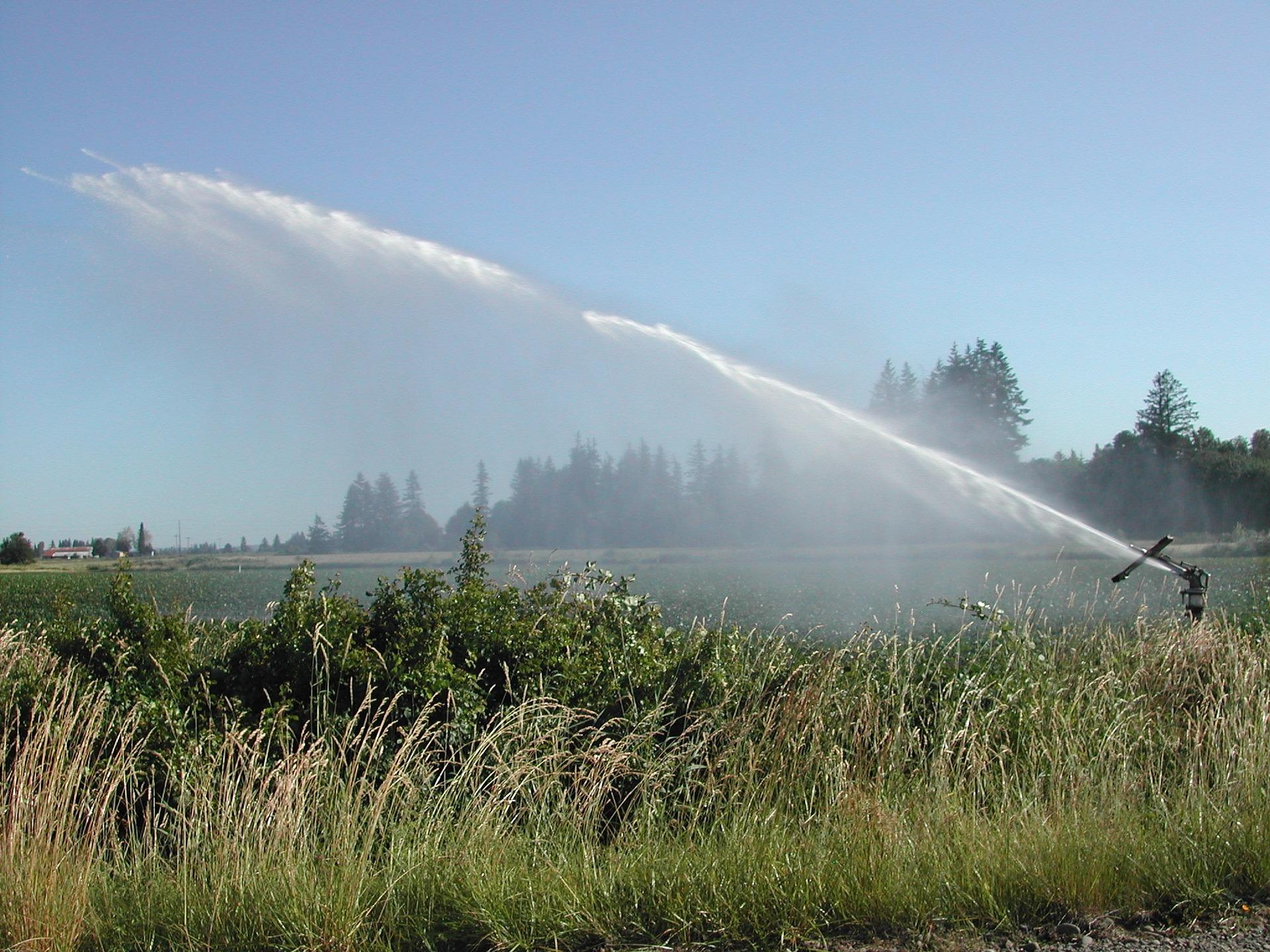 A imagem é uma plantação, sendo molhada por um irrigador fixo no chão, que envia um jato de água forte e longo sob as plantas.
