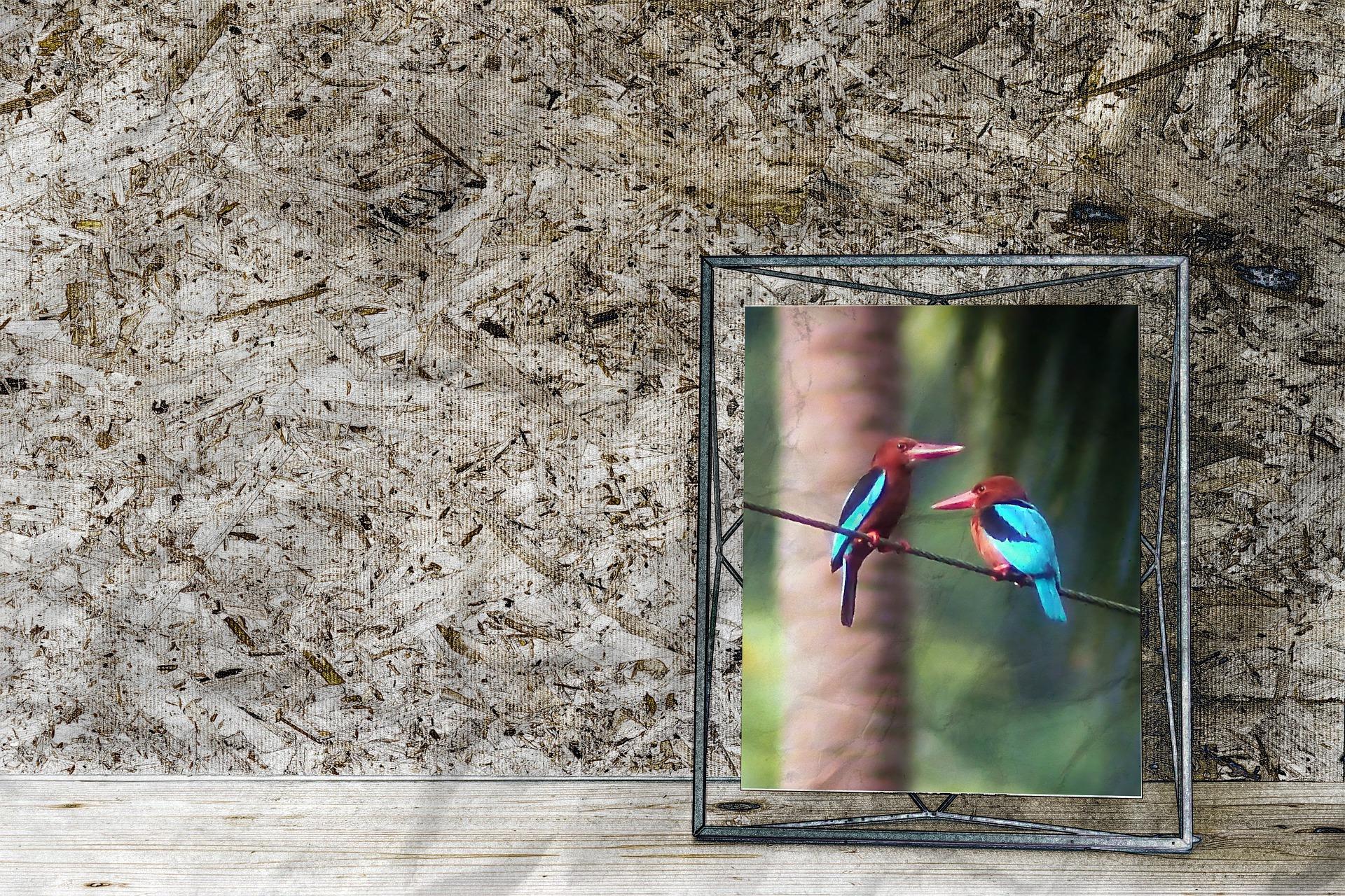 Porta retrato com foto de pássaros.