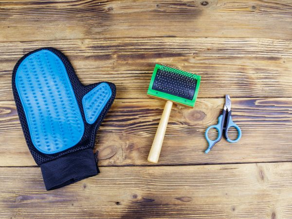 Pet accessories on wood background. Blue rubber grooming glove, pet slicker brush and claw clipper on wooden background. Top view. Pet care concept