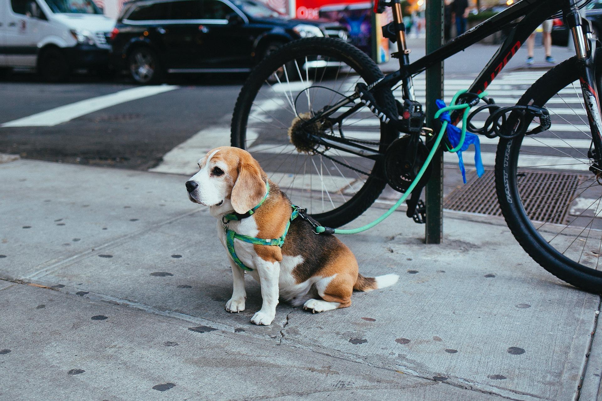 Cachorro com coleira presa em um poste na rua
